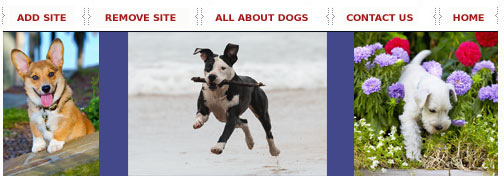 Washington dog training